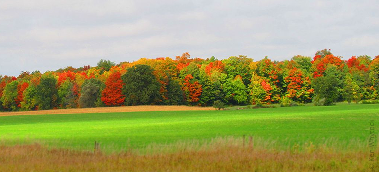Autumn field and forest, Bruce County