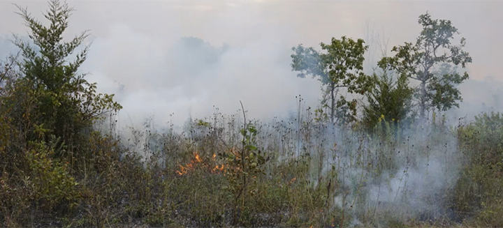 Controlled burn, Stone Road Alvar Nature Reserve © Robert Tymstra