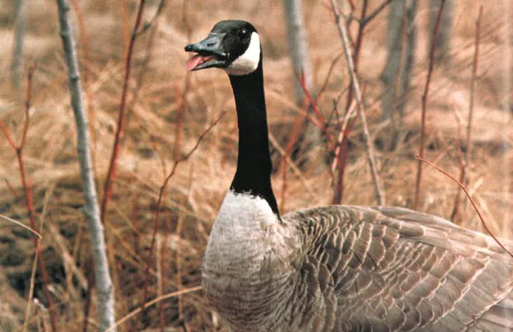 Ontario Naturalist Early Winter 1978