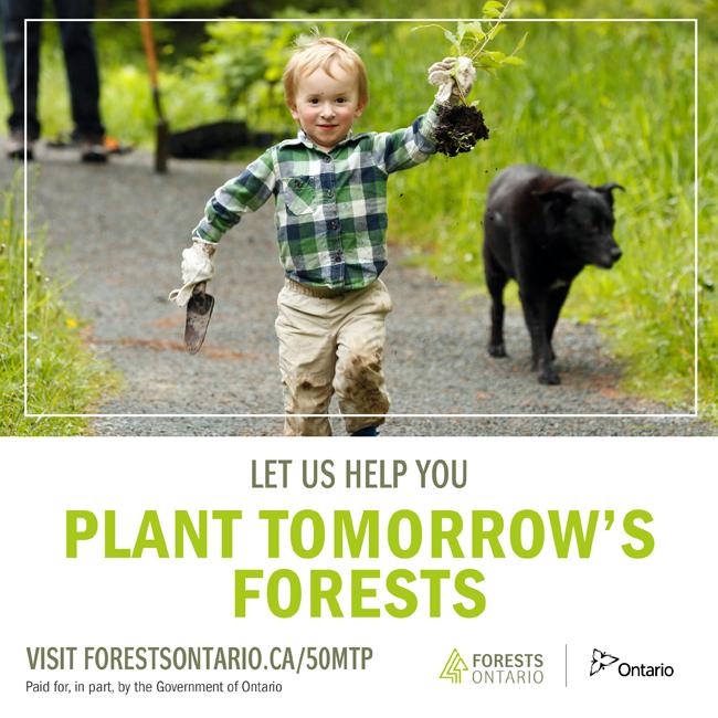 50 Million Tree Program