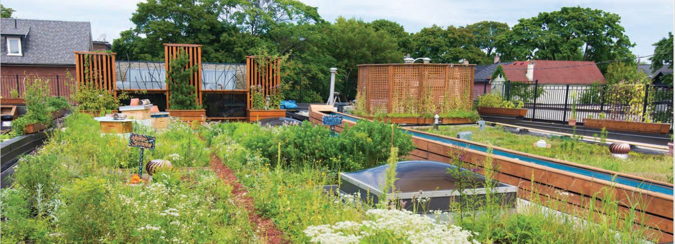 Rooftop gardens, naturalization, restoration, pollinator garden, urban habitat restoration, urban nature, habitat restoration
