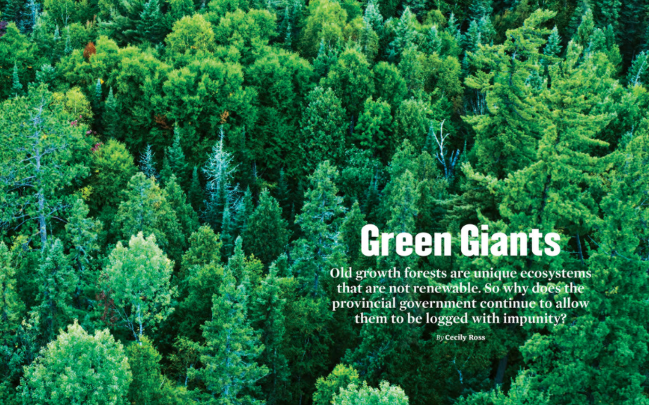 Green Giants, ON Nature Fall 2020, https://view.publitas.com/on-nature/fall-2020/page/24-25