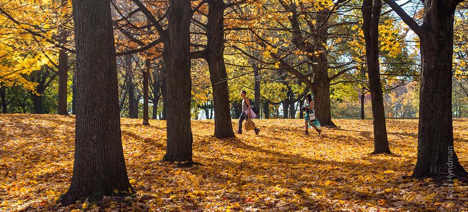 A couple enjoying an autumn walk in High Park, Toronto