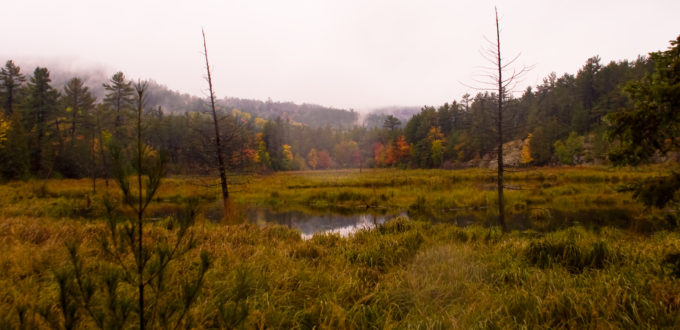 Killarney Provincial Park wetland
