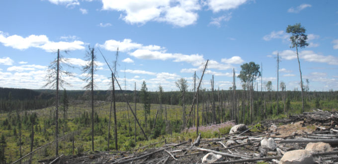 Logging at Sioux Lookou