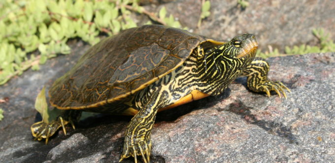 Lost Bay Nature Reserve Map Turtle