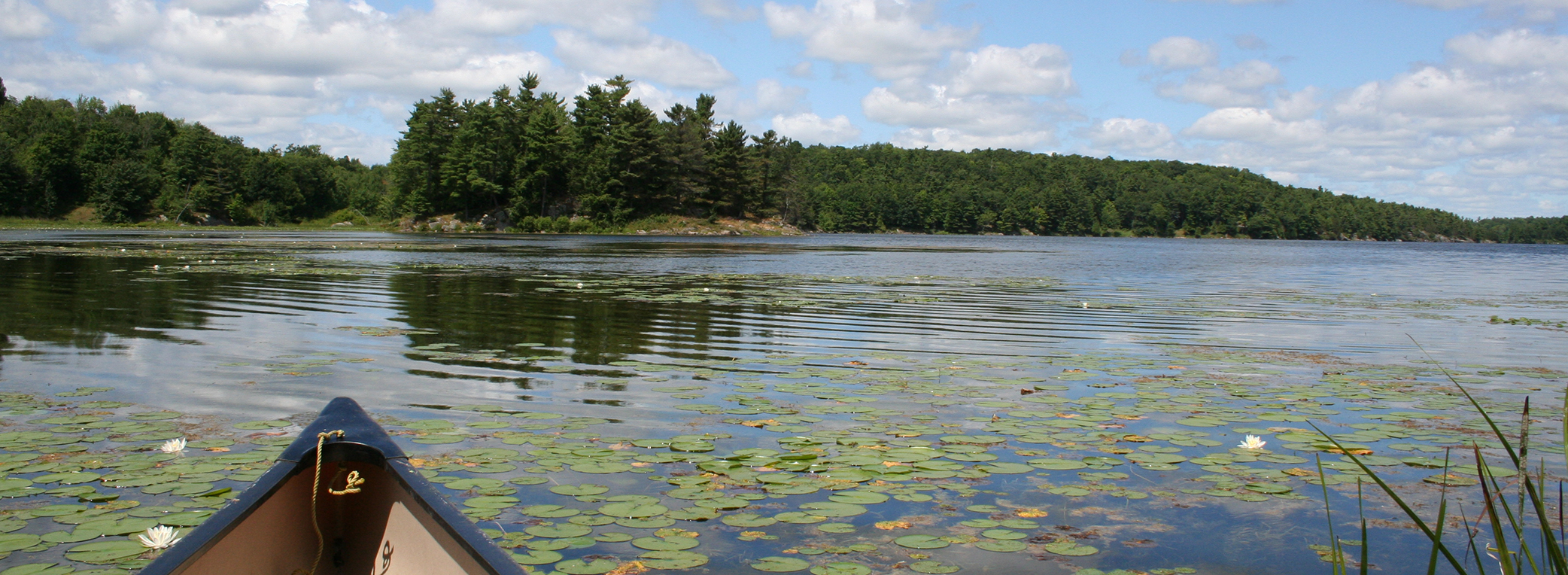 Canoeing shorelines wetlands at Lost Bay Nature Reserve, Frontenac Arch