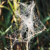 mesh-web, Credit: Dan Schneider
