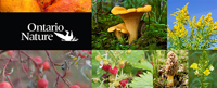 Northern_Forest_Foraging_Guide_banner_small_link