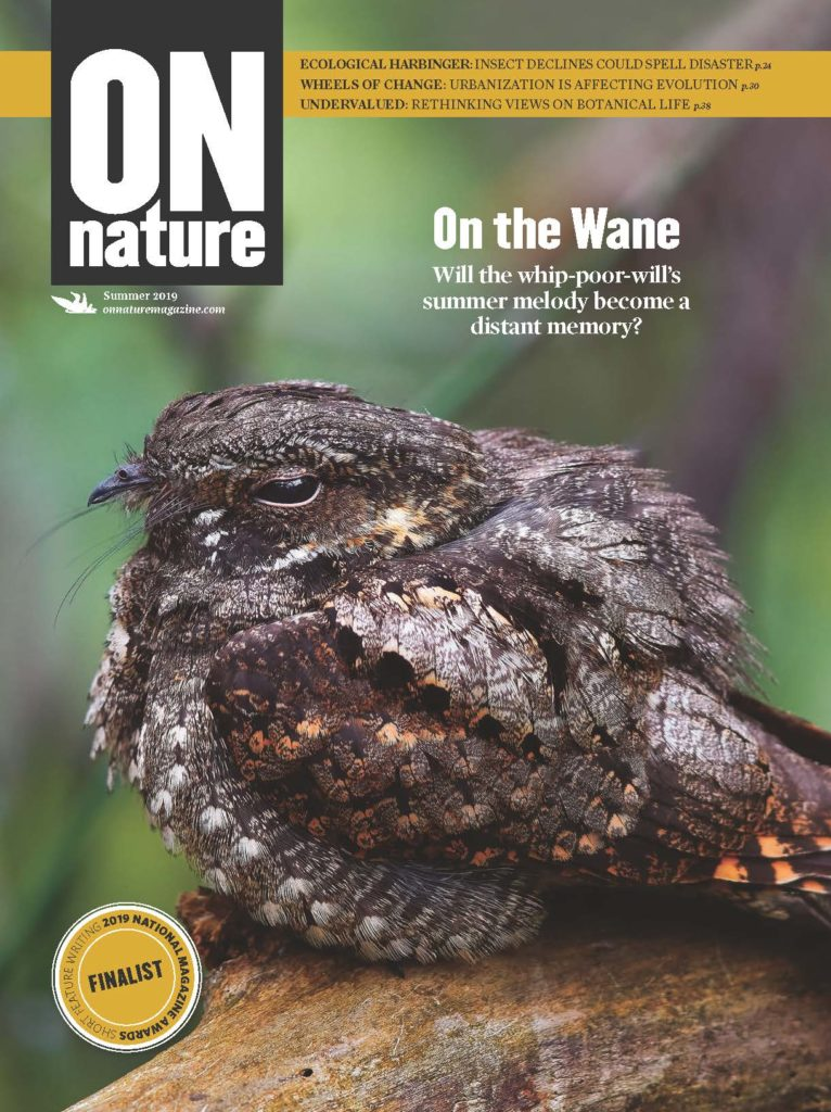 ON Nature magazine Summer 2019 cover