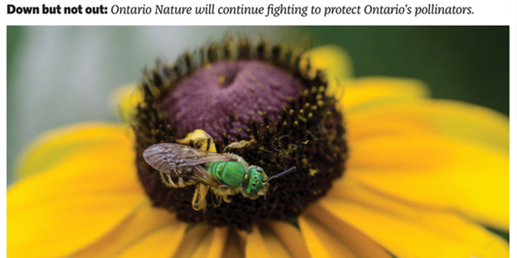 Letters –  Neonic Lawsuit Ruling