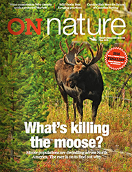 ON Nature Fall 2016 cover moose