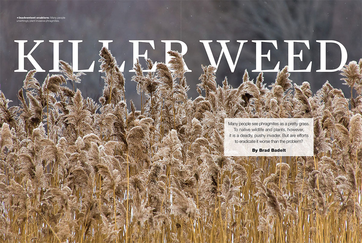 "Letters – ""Killer weed"""