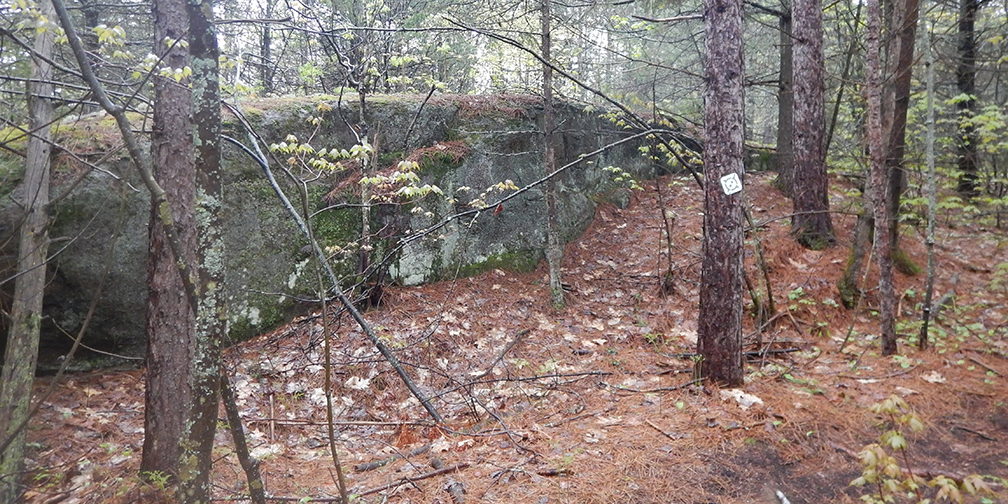 Canadian Shield and forest along Point Grondine Park trail