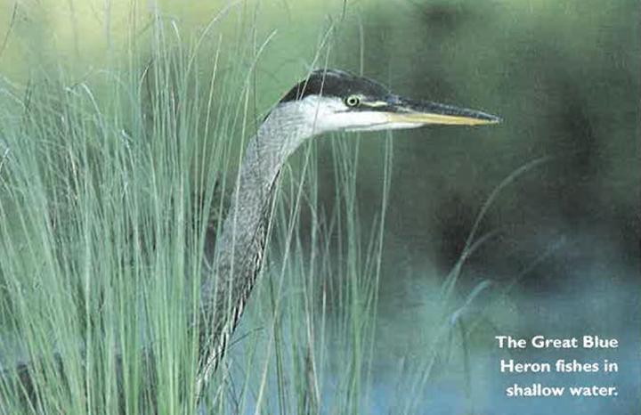 Seasons Magazine Spring 1997