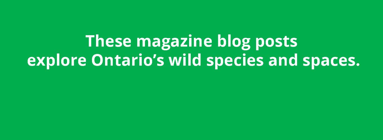 ON Nature blog sticky post