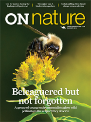 ON Nature Summer 2015 cover; a bumble bee photographed on goldenrod