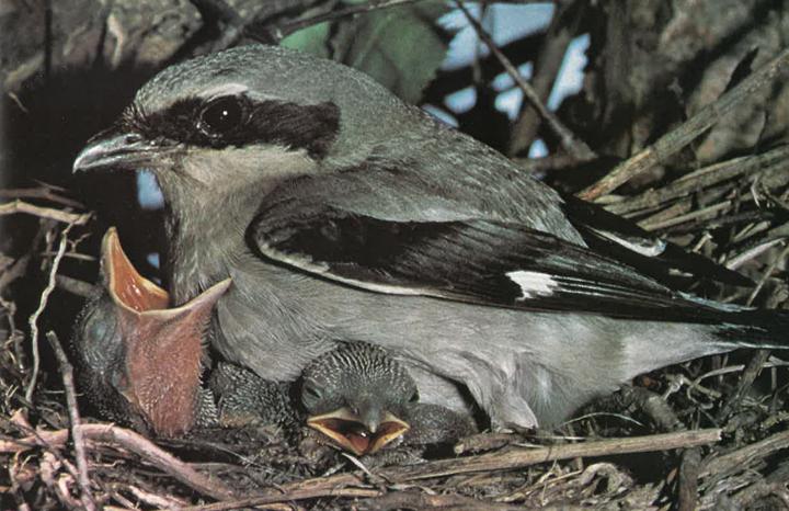 Ontario Naturalist Magazine June 1972