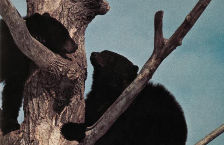 Ontario Naturalist Magazine Summer 1978
