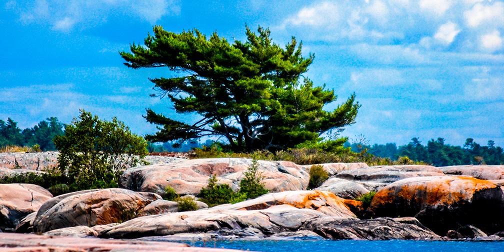 pine and lichen strewn Point Grondine coastline on Georgian Bay