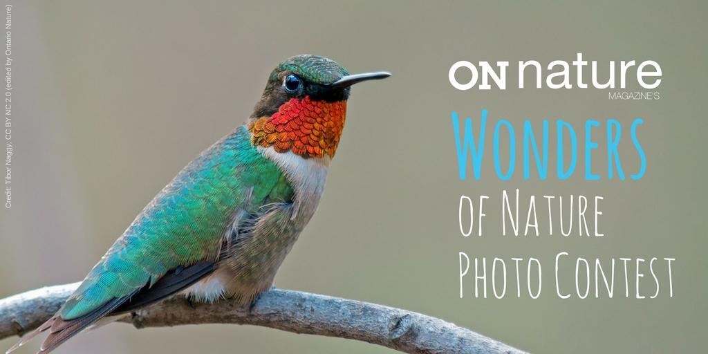 ON Nature Magazine's Wonders of Nature Photo Contest