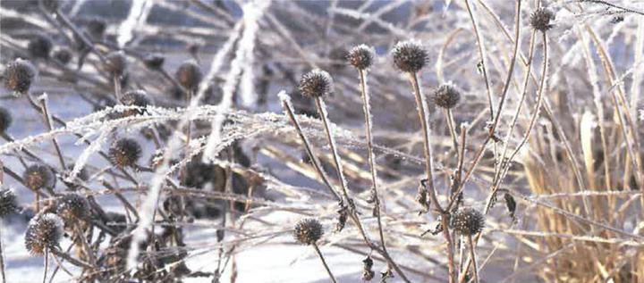 Seasons Magazine Winter 2001