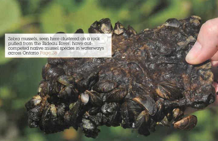 ON Nature Magazine Winter 2008