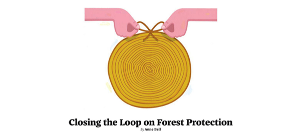 Letters – Re: Closing the Loop on Forest Protection