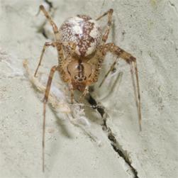 Hammock spider, Credit: Patrick Randall CC BY-NC-SA 2.0