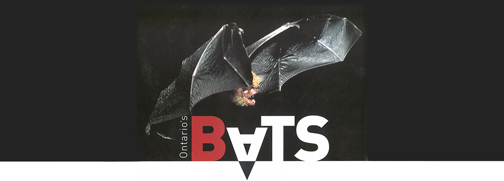 A Guide to Bats in Ontario