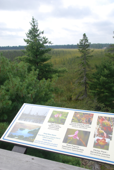 A beautiful view of the Loudon peatlands with an interpretive sign, credit: Back Roads Bill