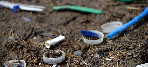 Plastic litter and plastic debris along Woodbine Beach