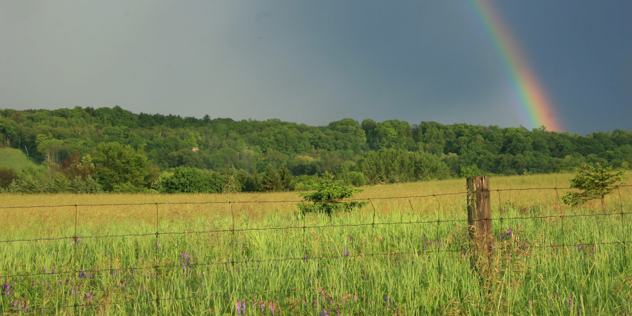 farm field, forests and rainbow in Ontario